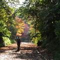 写真: 落ち葉の道