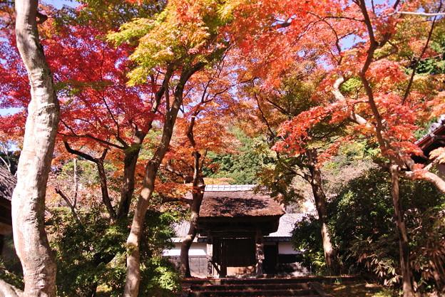 円覚寺 居士林