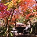写真: 円覚寺 居士林