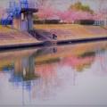 春の倉敷川