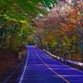 Photos: 紅葉トンネル