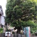 写真: 長谷寺(豊川市)山本勘助墓(遺髪塚)