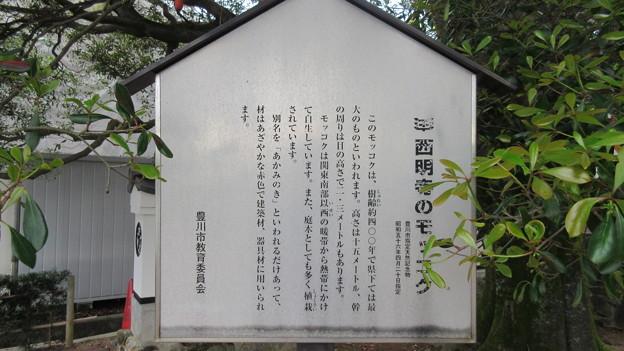 西明寺(豊川市)モッコク