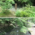 大洞院(周智郡森町)蓮池