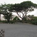 濱松城(浜松市営 浜松城公園)天守台跡