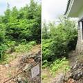 Photos: 岐阜城(稲葉山城。岐阜市)資料館東側