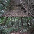 Photos: 小牧山城(小牧市営 史跡小牧山公園)空堀