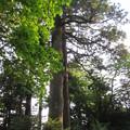 箱根神社(箱根町)矢立杉