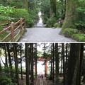 箱根神社(箱根町)平和の鳥居参道