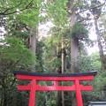箱根神社(箱根町)第四鳥居