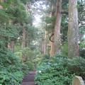 Photos: 箱根旧街道杉並木(箱根町)