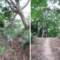 韮山城(伊豆の国市)二の丸・本丸堀切