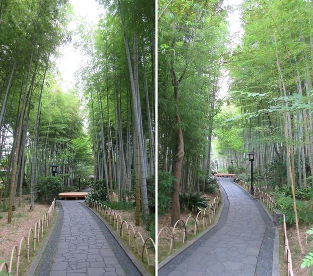 修善寺温泉(静岡県伊豆市)竹林の小径