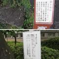 写真: 富士山本宮浅間大社(富士宮市)富士見石