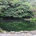 Photos: 富士山本宮浅間大社(富士宮市)湧玉池