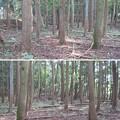 Photos: 長井坂城(渋川市・昭和村)本丸