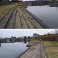 Photos: 綾瀬川(越谷市)出羽堀西より