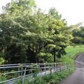 Photos: 河村城(足柄上郡山北町)馬違戸