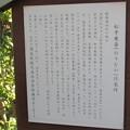 善導寺(館林市)大給松平家宗家7代 松平乗壽(乗寿。のりなが)墓