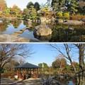 善導寺(館林市)庭園