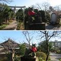 Photos: 館林城(館林市)稲荷郭・尾曳稲荷神社
