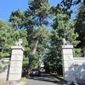 写真: 豪徳寺/世田谷城(世田谷区)惣門