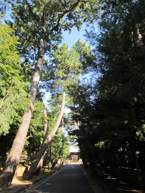 豪徳寺/世田谷城(世田谷区)参道