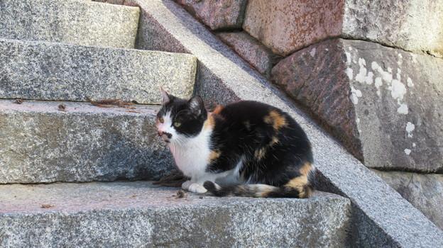 Photos: 恵林寺(甲州市小屋敷)