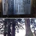 Photos: 法華寺/上社神宮寺跡(諏訪市)五本杉
