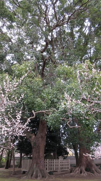弘道館(旧弘道館。水戸市)要石歌碑