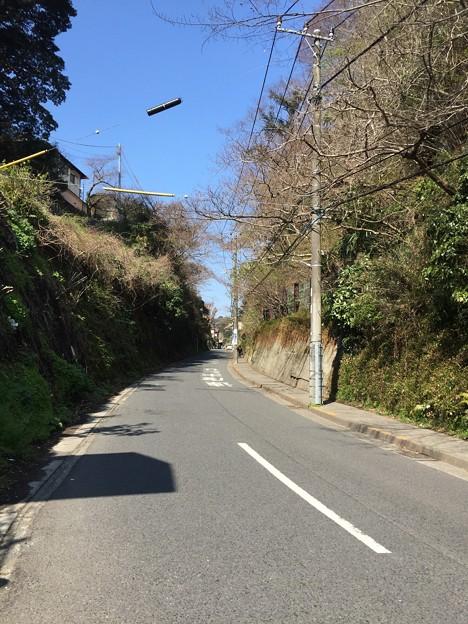 Photos: 極楽寺坂切通(鎌倉市)