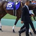 Photos: ショウナンパンドラ(2回東京8日 11R 第11回 ヴィクトリアマイル(GI)出走馬)