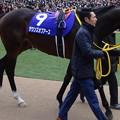 Photos: サウンズオブアース(5回中山8日 10R 第60回グランプリ 有馬記念(GI)出走馬)