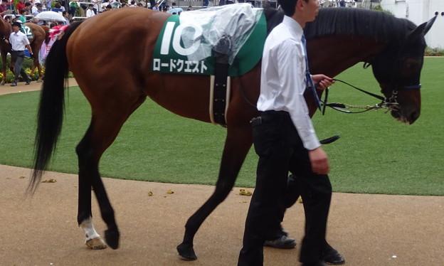 ロードクエスト(4回中山2日 11R 第61回 京成杯オータムハンデキャップ(GIII)出走馬)