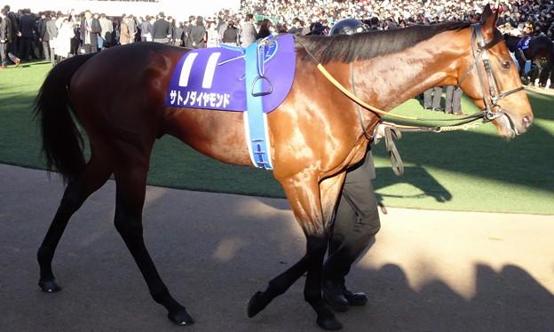 サトノダイヤモンド(5回中山9日 10R 第61回グランプリ 有馬記念(GI)出走馬)