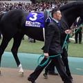 Photos: ゴールドアクター(5回東京8日 11R 第36回 ジャパンカップ(GI)出走馬)