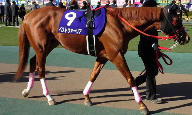 Photos: ベストウォーリア(1回東京8日 11R 第34回 フェブラリーステークス(GI)出走馬)