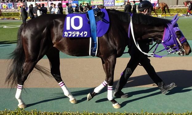 カフジテイク(1回東京8日 11R 第34回 フェブラリーステークス(GI)出走馬)