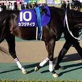 Photos: カフジテイク(1回東京8日 11R 第34回 フェブラリーステークス(GI)出走馬)
