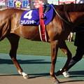 コパノリッキー(1回東京8日 11R 第34回 フェブラリーステークス(GI)出走馬)