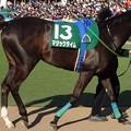 写真: マジックタイム(2回中山6日 11R 第35回 ローレル競馬場賞中山牝馬ステークス(GIII)出走馬)