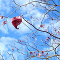 Photos: 紅葉散る