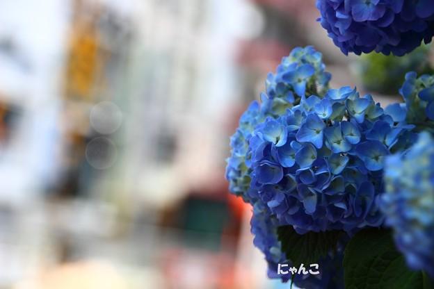 ~八仙花~