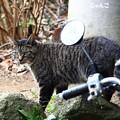 写真: ~猫とミラーと電柱と~