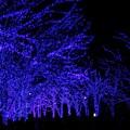 ~青の洞窟~