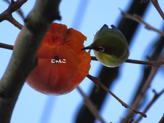 写真: ~柿食えば~