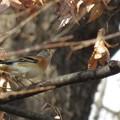 Photos: ~あ!鳥!~