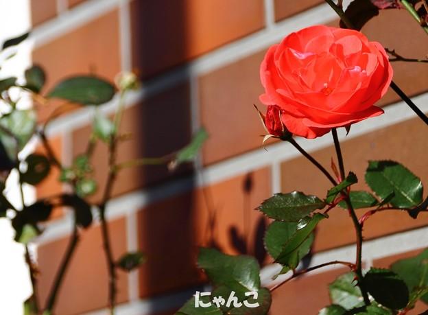 Photos: ~煉瓦の家のお庭には~