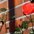 写真: ~煉瓦の家のお庭には~