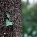 写真: ~ある日、森の中~